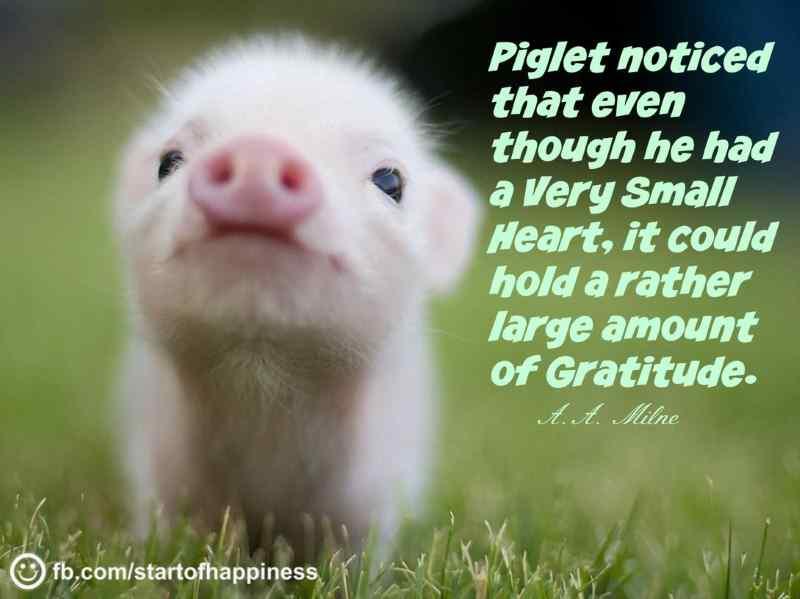 Gratitude Quote 08