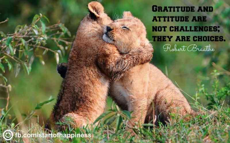 Gratitude Quote 11